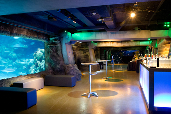 London Aquarium Shared Christmas Party SE1, large fish tank light in blue with wooden walk way